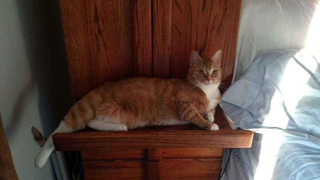 cat sitting on the pullout nightstand