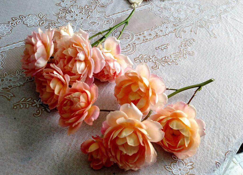 peach cut roses