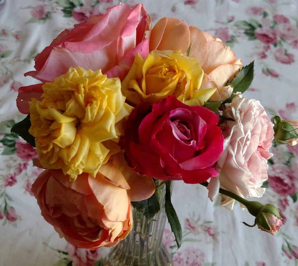 bouquet of cut roses from my garden