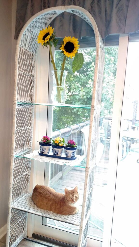 tall shelf with flowers and cat