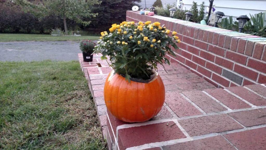 mum in a pumpkin