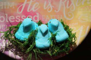 closeup of three blue chicks in marshmallow peeps nest