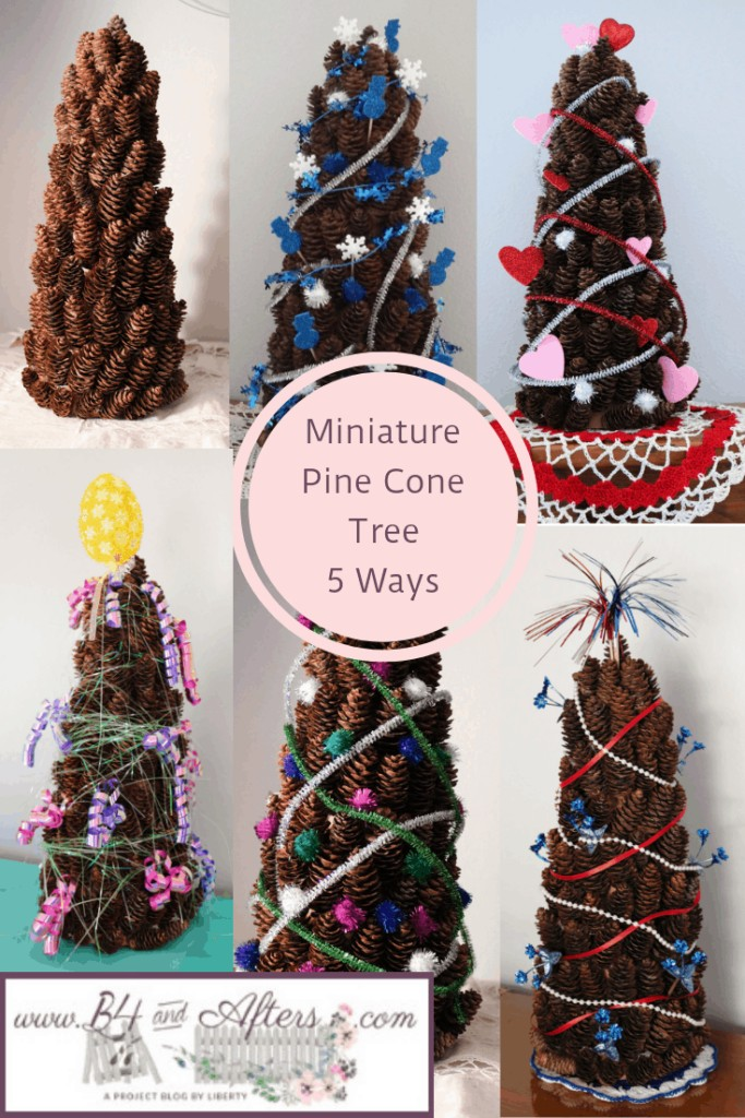 6 different pine cone trees