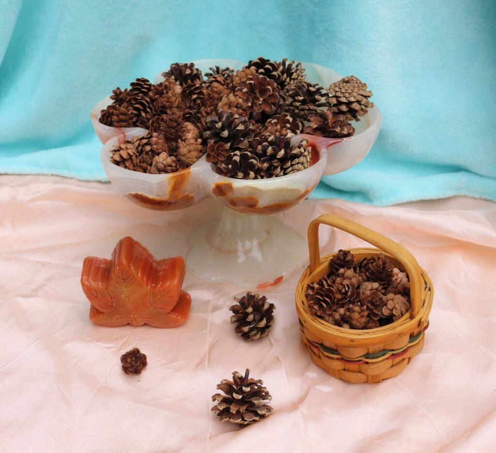 miniature pine cone vignette