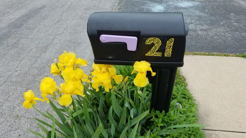 black mailbox with flag and yellow irises