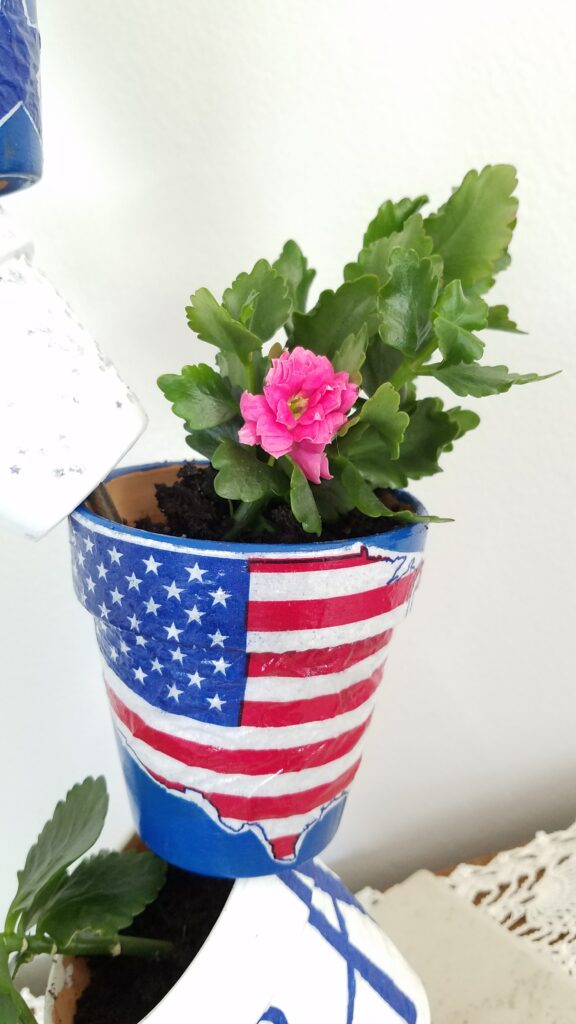 flag pot with pink flower kolanchoe