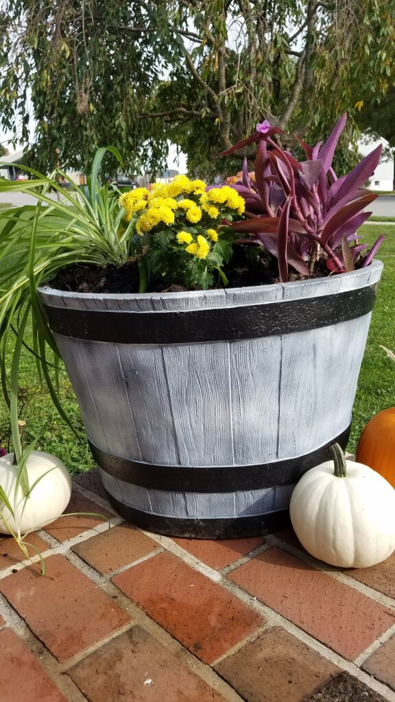 barrel planter with yellow mums and purple heart plants