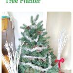 Three foot high Christmas tree in a jumbo bucket planter