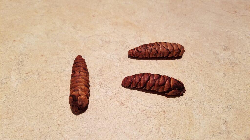 3 mini wet pine cones