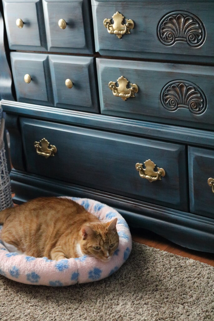 cat with blue dresser