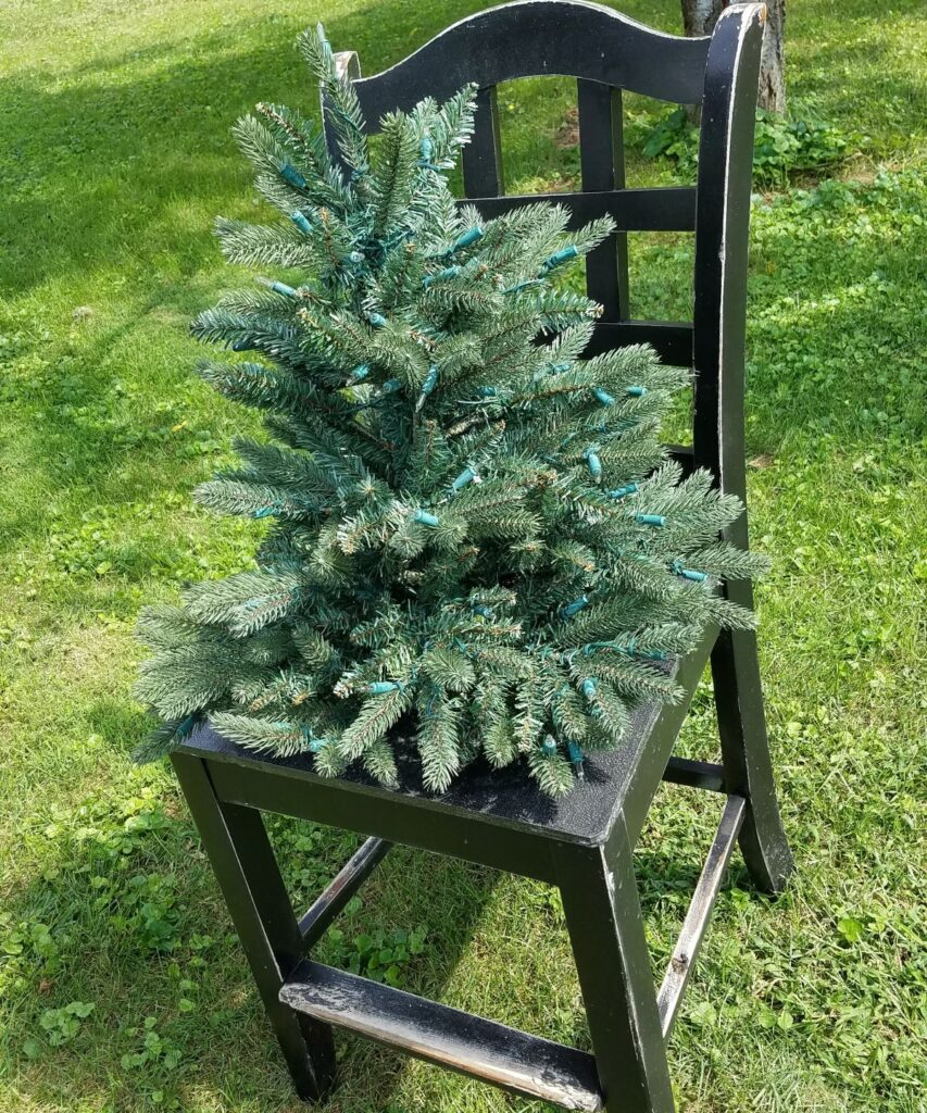 small evergreen tree on a chair
